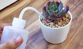 How to take care of succulent plants-min